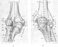 Рис. 1. Локтевой сустав (пунктиром обозначены осевые линии сустава и костей: a-a — ось плечелучевого сустава, б — ось плеча, в — ось предплечья; г-г — ось локтевого сустава): I — вид спереди: 1— венечная ямка; 2 — медиальный и ад-мыщелок плечевой кости; 3 — блок плечевой кости; 4 — венечный отросток; 5 — лучевая вырезка локтевой кости; 6 — край полулунной вырезки; 7 — локтевая кость; 8 — бугристость локтевой кости; 9 — бугристость сухожилия двуглавой мышцы; 10 — шейка лучевой кости; 11 —головка лучевой кости с суставной окружностью; 12 — головка мыщелка плечевой кости; 13 — латеральный надмыщелок плечевой кости; 14 — лучевая ямка; II — вид сзади: 1 — латеральный край блока плечевой кости; 2 — латеральный надмыщелок плечевой кости; 3 — головка мыщелка плечевой кости; 4 — головка лучевой кости с суставной окружностью; 5 — шейка лучевой кости; 6 — гребень супинатора; 7 — край полулунной вырезки; 8 — медиальный край блока; 9 - борозда локтевого нерва; 10 — медиальный мыщелок плечевой кости; 11 — локтевой отросток; 12 — ямка локтевого отростка.