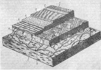 Рис. 6. Схема серозно-гемато-лимфатического барьера волокнистого типа