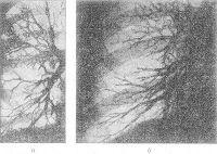 Рис. 2. Бронхограммы (прямая проекция) в норме (а) и у больного с хронической везикулярной эмфиземой (б): по сравнению с нормой не контрастируются мелкие бронхи, дистальные отделы бронхов 4-го и 5-го порядков сужены и деформированы.