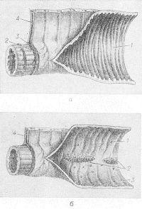 Рис. 3. Схематическое изображение строения стенки тонкой кишки: а — тощей кишки (1 — круговые складки слизистой оболочки; 2 — серозная оболочка; 3 — непокрытая серозной оболочкой часть мышечной оболочки; 4 — брыжейка); б — подвздошной кишки (1 — одиночный лимфатический фолликул; 2 — групповые лимфатические фолликулы; 3 — круговая складка; 4 — брыжейка).