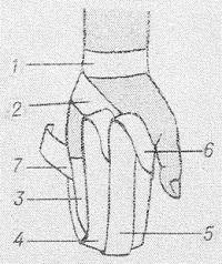 Рис. 35. Наложение возвращающейся повязки кисти.