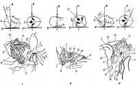 Рис. 2. Схематическое изображение укладок головы для рентгенографии височной кости и схемы рентгенограмм в трех проекциях: I — боковая (по Шюллеру); II — косая (по Стенверсу); III — аксиальная (по Майеру); а — вид спереди; б — вид сверху (проекции большого затылочного отверстия и пирамид височных костей обозначены черным цветом); С — сагиттальная плоскость; В — вертикальная ось; Н — кассета с рентгенографической пленкой (стрелкой указано направление пучка рентгеновского излучения): 1 — ушная раковина; 2 — внутренний слуховой проход; 3 — наружный слуховой проход; 4 — головка нижней челюсти; 5 — верхушка пирамиды; 6 — сосцевидный отросток; 7 — сосцевидные ячейки; 8 — затылочно-сосцевидный шов; 9 — борозда сигмовидного синуса; 10 — теменно-сосцевидный шов; 11 — ячейки чешуи височной кости; 12 — сосцевидная пещера; 13 — латеральный полукружный канал; 14 — передний полукружный канал; 15 — преддверие; 16 —улитка; 17 — слуховые косточки; 18 — канал сонной артерии.