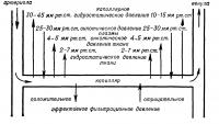 Рис. 1. Схема распределения давления по длине кровеносного капилляра.
