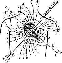 Схематическое изображение электрического поля сердца (по схеме Уоллера)