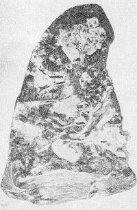 Рис. 2. Макропрепарат легкого при туляремии (фронтальный разрез): видны очаги некроза белого цвета.
