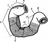 Рис. 1. Схематическое изображение анатомических отделов (частей) двенадцатиперстной кишки: I — pars superior; II— pars descendens; III — pars horizontalis (inf.); IV — pars ascendens; 1 — flexura duodeni sup.; 2 — flexura duodeni inf.; 3 — flexura duodenojejunalis. B контурах заштрихованы внебрюшинные зоны двенадцатиперстной кишки: а — зона прикрепления lig hepatoduodenale; б — зона, расположенная за корнем брыжейки поперечной ободочной кишки; в — зона, прикрытая брыжейкой восходящей ободочной кишки; г — зона, расположенная за корнем брыжейки тонкой кишки; д — зона прилегания головки поджелудочной железы; e — pylorus, ж — jejunum.
