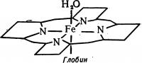 Рис. 2. Лиганды (молекулы и ионы, связанные с центральным ионом в комплексном соединении) железа в гемоглобине.
