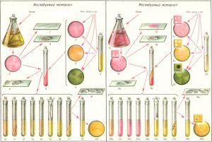 Схема бактериологического исследования на брюшной тиф