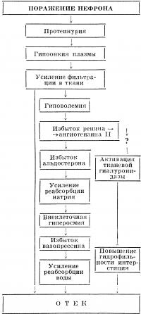 Рис. 3. Схема патогенеза нефротического отека.