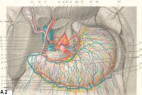 Рис. A.2. Желудок, вид спереди: 1 и 29 — лимфатические сосуды и узлы; 2 и 31 — левая и правая желудочно-сальниковые вены; 3 и 30 — левая и правая желудочно-сальниковые артерии; 4 — большой сальник; 25 и 26 — правая и левая желудочные вены; 5 —брюшная аорта; 7 — селезеночная вена: 8 — правая доля печени; 9 — общий желчный проток; 10 и 25 -селезеночная артерия; 11—желудочно-дуоденальная артерия; 12 — правая желудочная артерия; 13 — воротная вена; 14 — кровеносные сосуды желчного пузыря; 15 — пузырный проток; 16 — общий печеночный проток; 17—собственная печеночная артерия; 18 — нижняя полая вена; 19 — общая печеночная артерия; 20 — правая нижняя диафрагмальная артерия; 21 — чревный ствол; 22 — левая желудочная артерия; 23 и 24 — передний и задний блуждающие стволы; 27 — поджелудочная железа; 28 — селезенка.