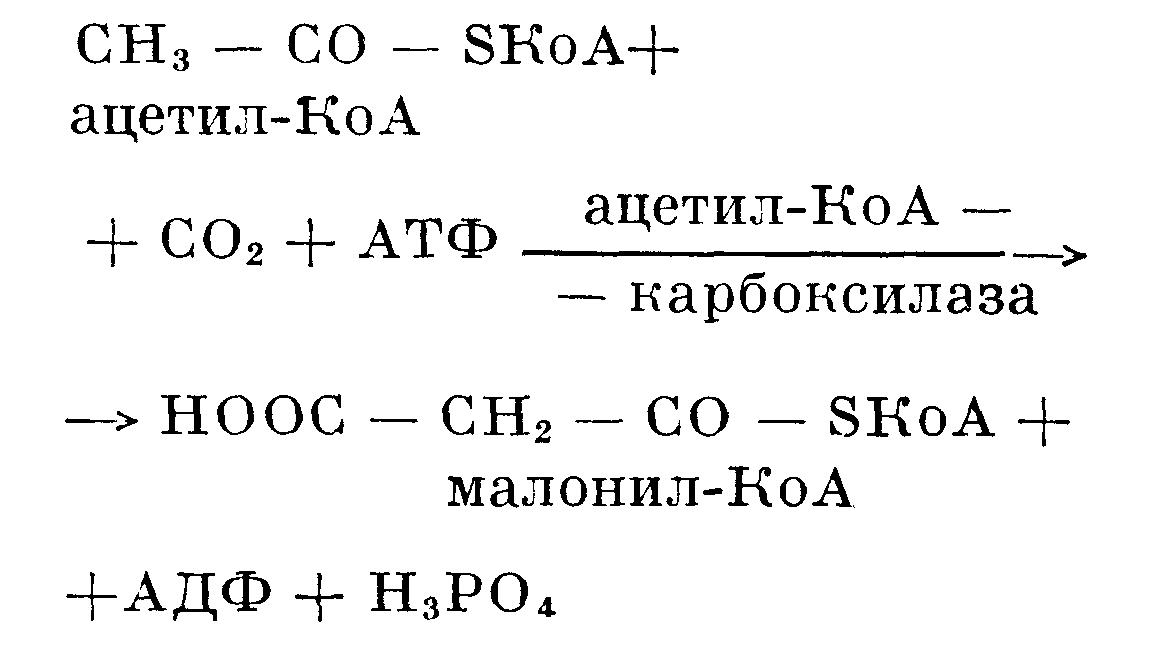 Карбоксилаза фото