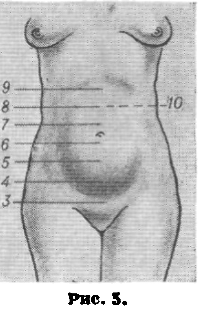 Симптом Хегара (Ранний Признак Беременности) фото